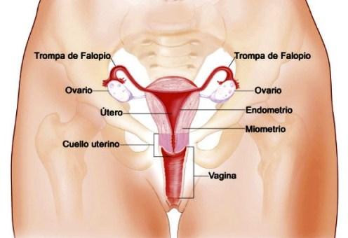 Qué es el aparato reproductor femenino