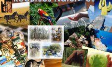 ¿Cuáles son los recursos naturales?