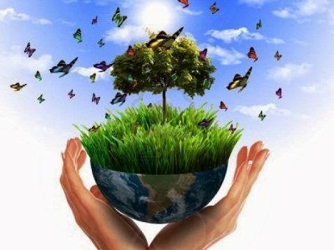 ¿Cuál es la importancia del medio ambiente?