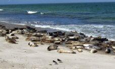 ¿Por qué la contaminación del agua afecta a los seres vivos?