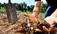 ¿Por qué es importante evitar la contaminación del suelo?