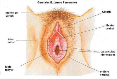 Aparato reproductor externo femenino