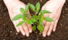 ¿Cómo conservar los recursos naturales?