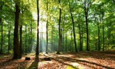 Importancia de cuidar los recursos naturales