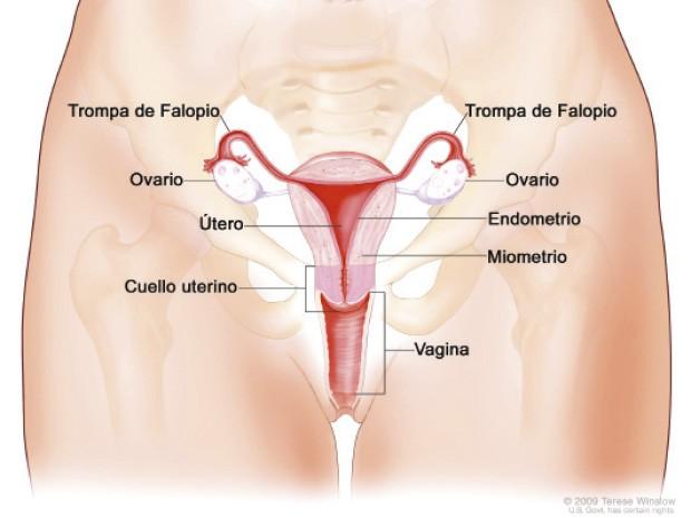 Importancia de la higiene del aparato reproductor femenino