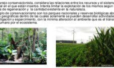 ¿Qué es el manejo sostenible de los recursos naturales?
