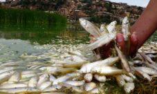 Cómo afecta la contaminación del agua a los animales
