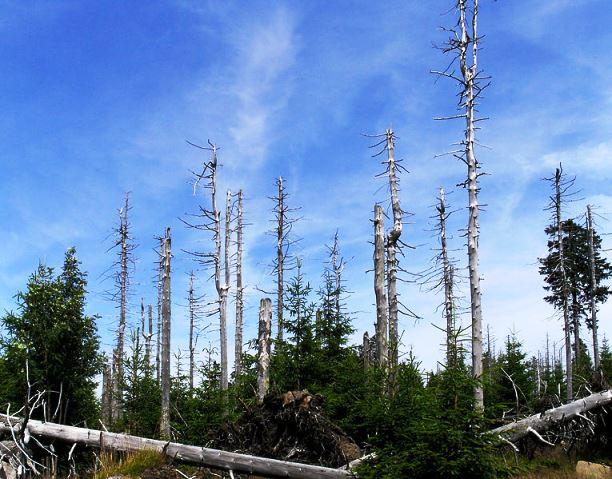 Efectos de la lluvia ácida en el medio ambiente