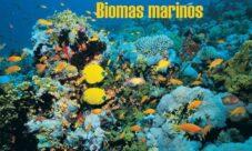 ¿Cuáles son los biomas marinos?