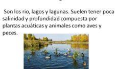 ¿Factores físicos de los biomas de agua dulce?