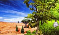 Importancia de la conservación de los biomas bosque y desierto