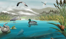 Leyenda de la Laguna de El Cajas