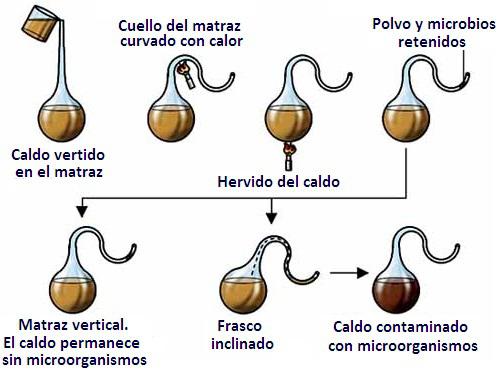 Teoría de la generación espontánea de Louis Pasteur