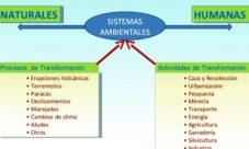 Cuáles son las causas del impacto ambiental