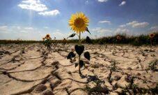 Manifestaciones del Impacto Ambiental
