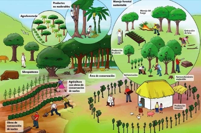 ¿Qué es el desarrollo rural sustentable?